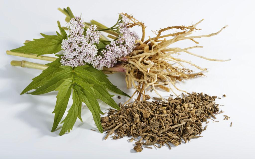 sedativi naturali - valeriana con radici