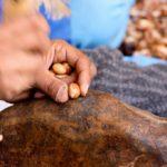 olio di argan lavorazione - dettaglio