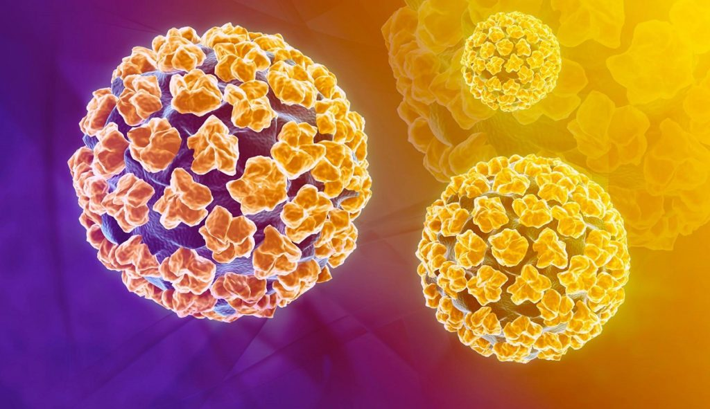 HPV - un'immagine a colori dell'HPV (human papilloma virus)