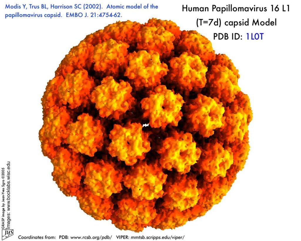 Rappresentazione del capside di HPV