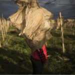 Lo sfruttamento delle braccianti rumene nel Ragusano: una realtà di violenze, soprusi e aborti