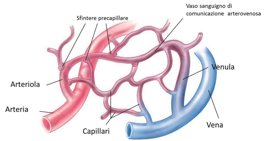 Alla base dei geloni c'è la costrizione delle arteriole, che riduce gli scambi metabolici a livello cutaneo.