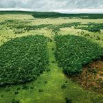 La deforestazione e i cambiamenti climatici: un binomio sottovalutato