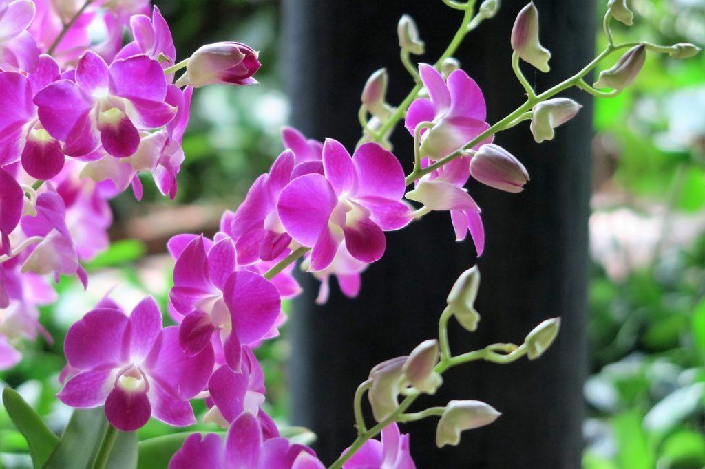 I fiori in Cina che simboleggiano l'amicizia sono le orchidee
