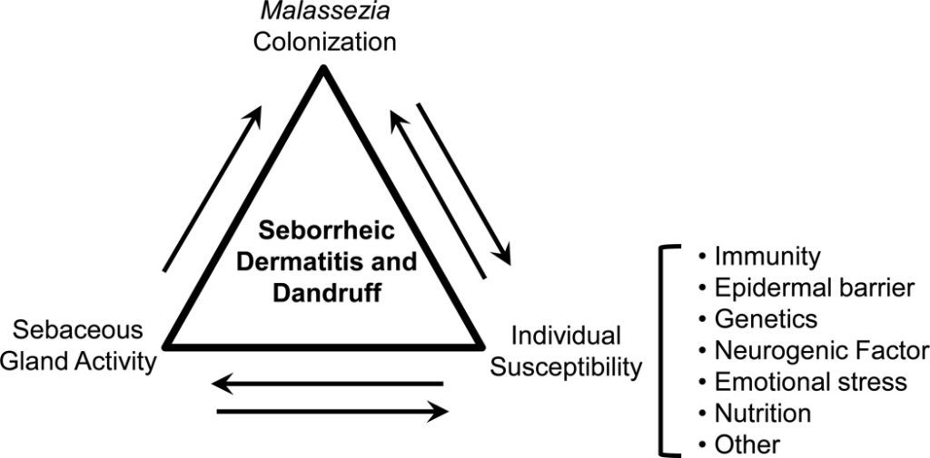 Fattori implicati nello sviluppo della forfora, ovvero: suscettibilità individuale, aumentata secrezione sebacea e colonizzazione dello scalpo da parte dei lieviti.