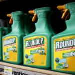 Monsanto condannata: sentenza che potrebbe diventare storica