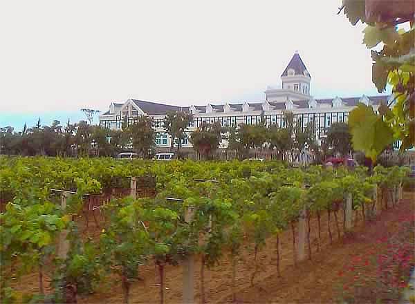 Vini cinesi: Vitigni nello Château Changyu nello Shandong