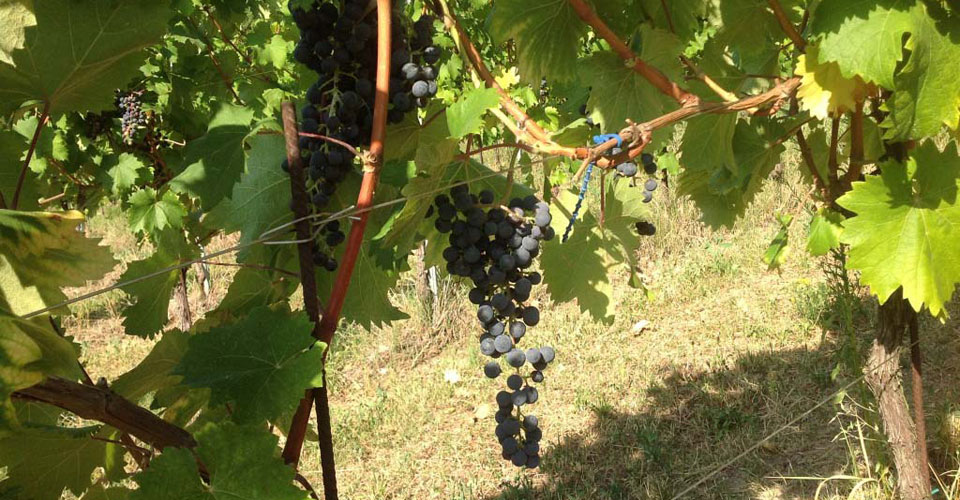vini bresciani botticino