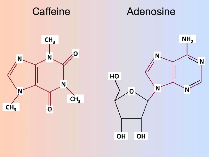 Caffeina e adenosina a confronto