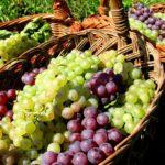Cucina autunnale: idee e ricette sfiziose a base d'uva