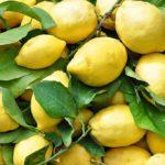 Giallo limone: menù completo e ricette