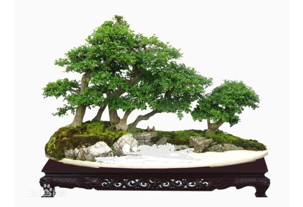 Bonsai - arte giapponese nata in Cina