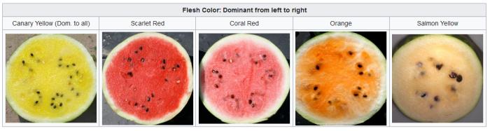 Varietà di angurie in sezione longitudinale, per evidenziare il colore della polpa: giallo canarino, rosso scarlatto, rosso corallo, arancione, giallo salmone. o bianco