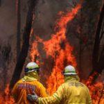 Australia in fiamme: un vero disastro ambientale