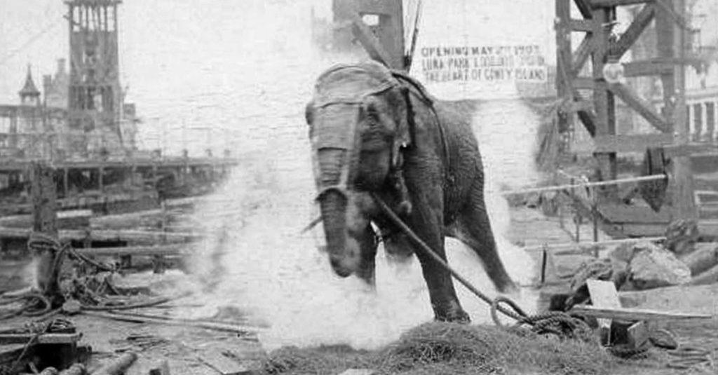 Esecuzione tramite corrente elefantessa