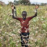 L'Africa in ginocchio per l'invasione delle locuste