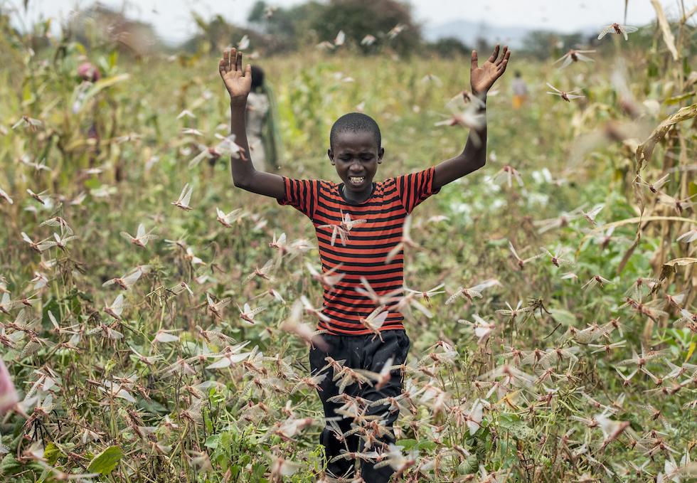 Invasione delle locuste Africa