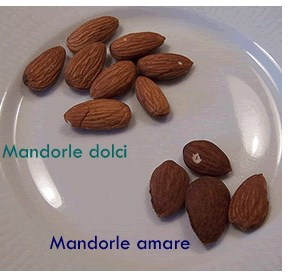 Mandorle dolci e amare a confronto. Credits: toluna.com