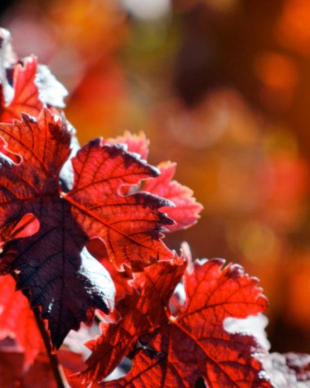 Vite-rossa-circolazione-copertina