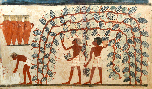 Uva nell'Antico Egitto - Parete ovest della Tomba di Nakht