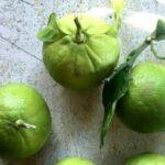 Ricette col bergamotto: risotti, dolci e liquori