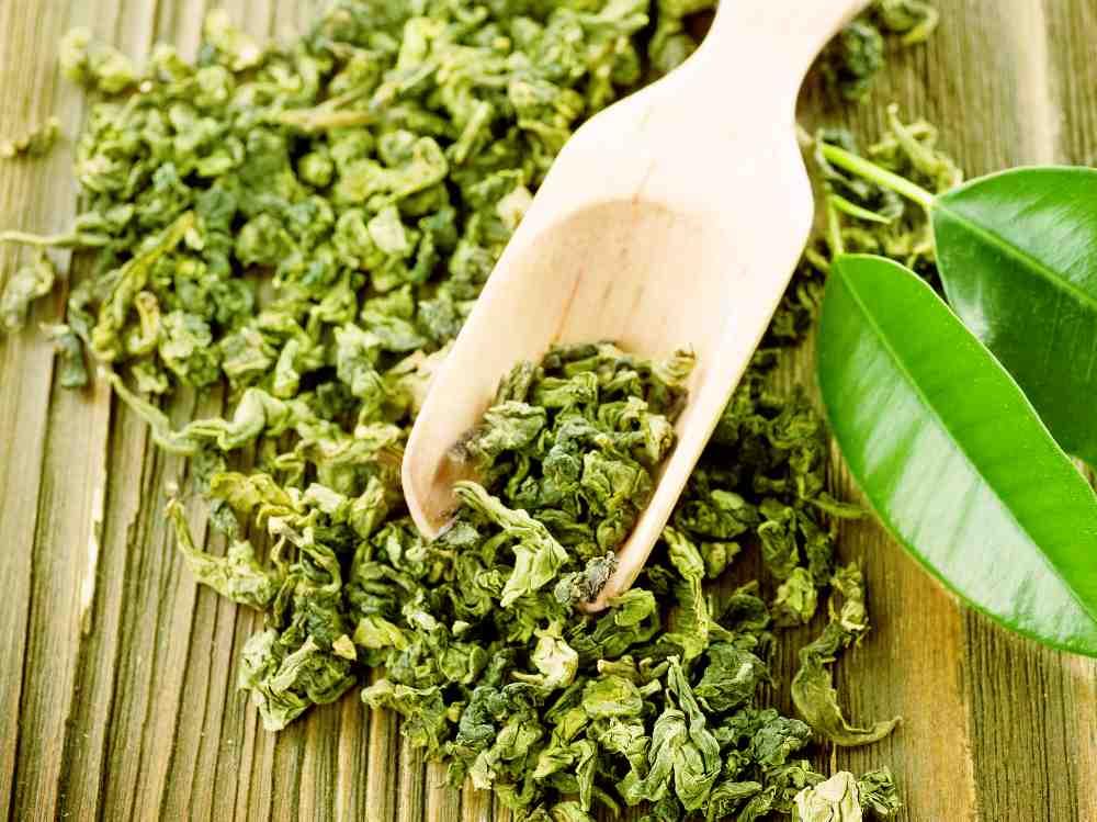 Tè verde foglie - Camellia sinensis