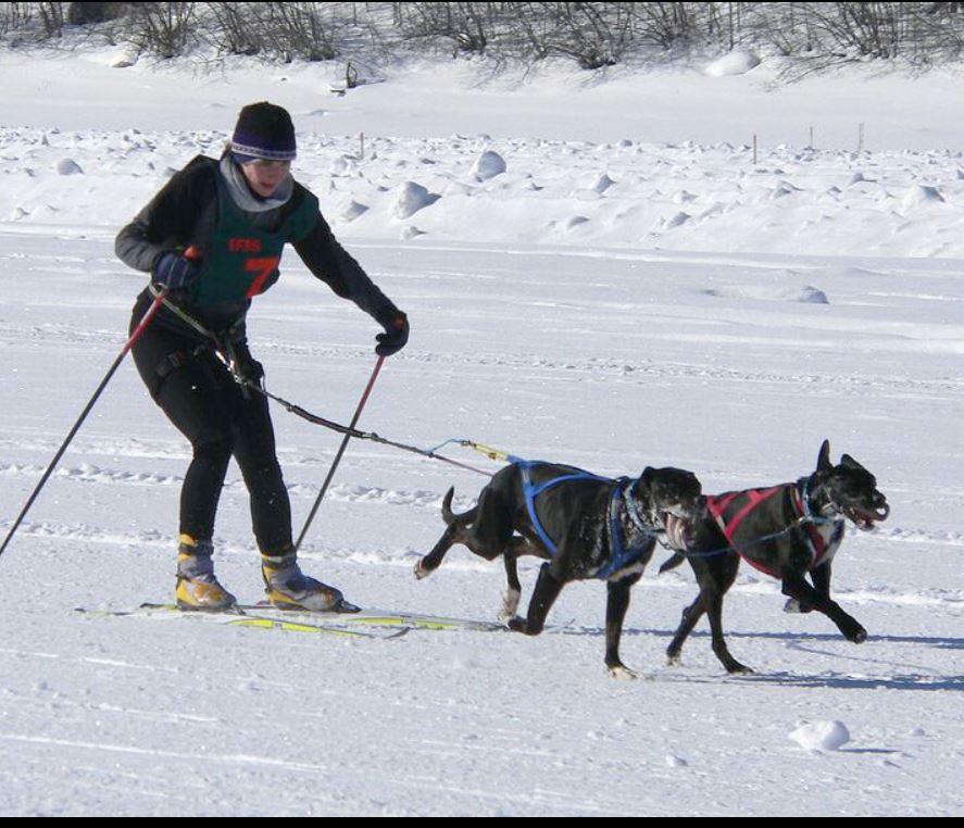 Sport alternativi -Skijoring